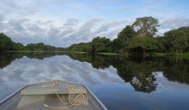 Découverte de l'Amazonie lors d'un voyage au Brésil