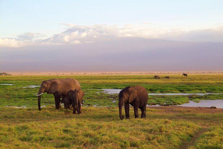 L'Afrique en 5 destinations