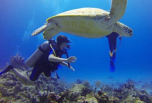 voir des tortues lors d'une plongée au Mexique