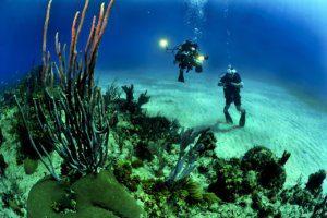 Plongée dans l'océan pacifique au Mexique